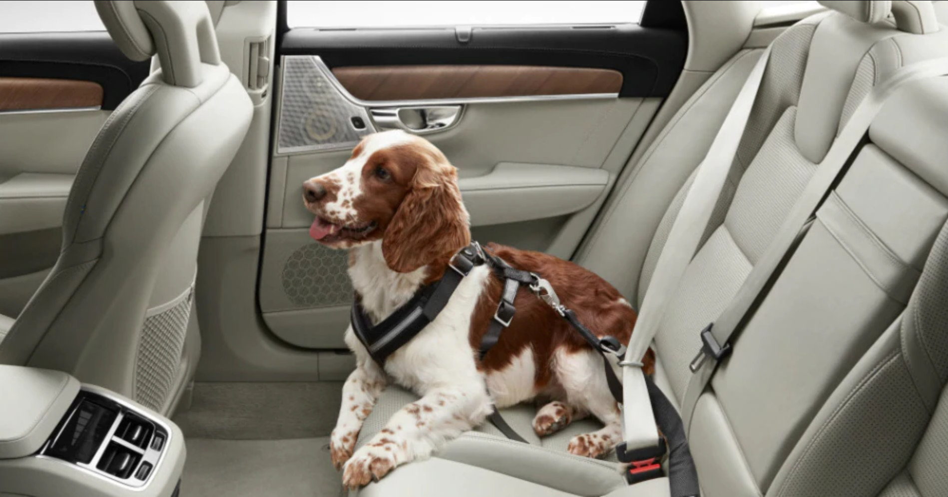 Volvo Says: Restrain your Pets!